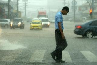 Panama Rain