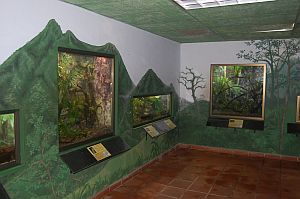 Amphibian Conservation Center in El Valle de Anton