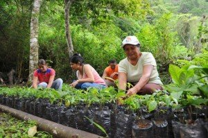 Workers help to replant forests lost to Panama Canal Expansion.